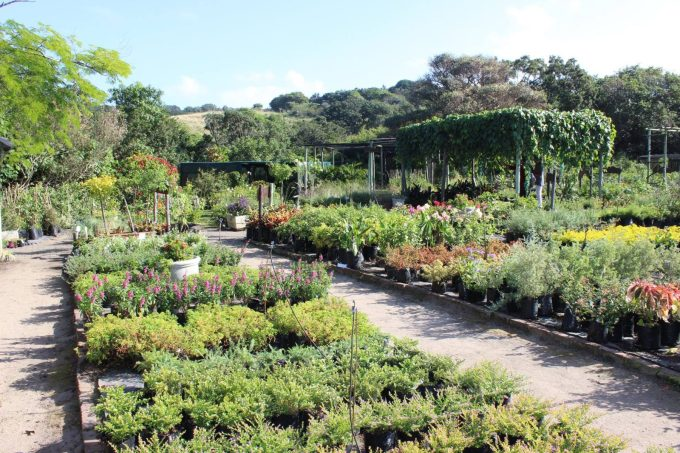 Folly Fields Nursery - Umzumbe KZN South Coast